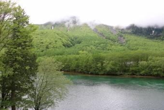 雨上がりの新緑
