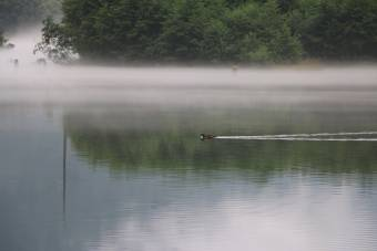 通り雨の上がった大正池